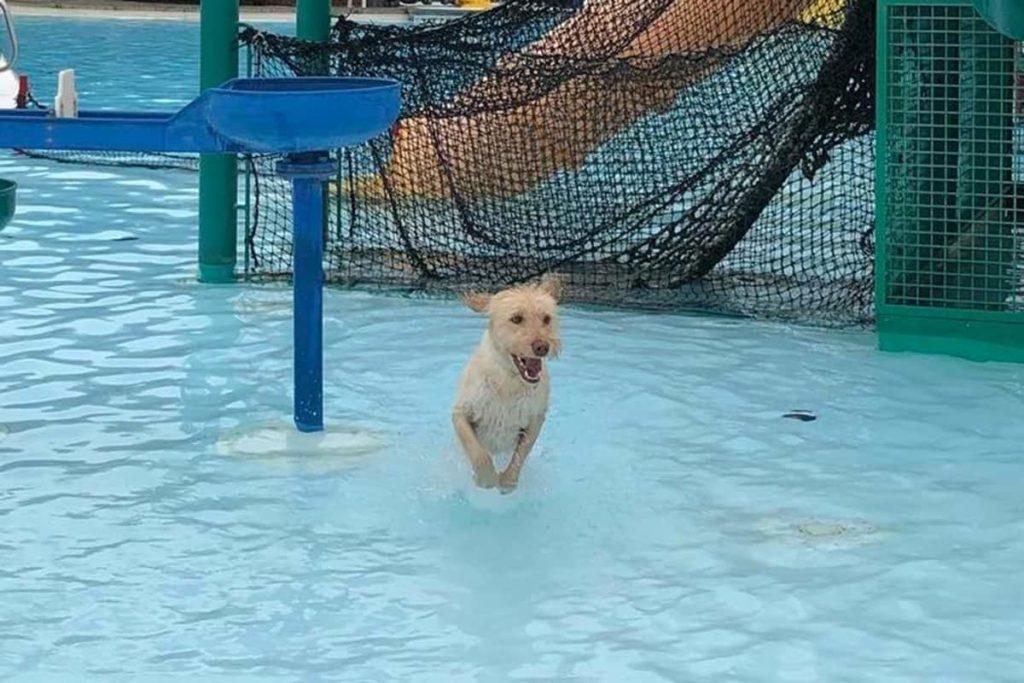 Doggie-Dip5