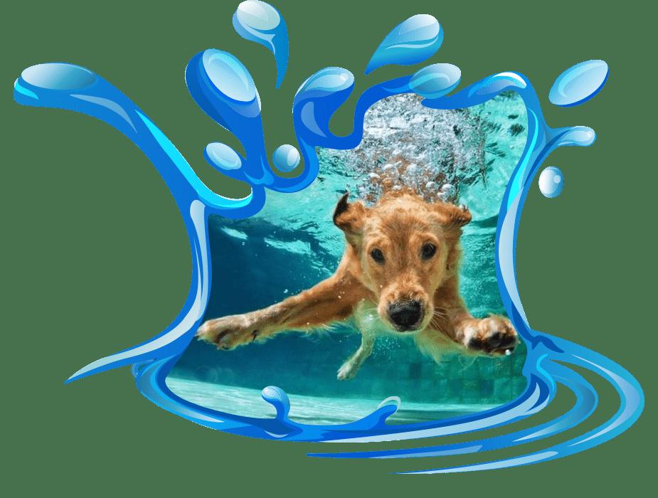 taking a doggie dip